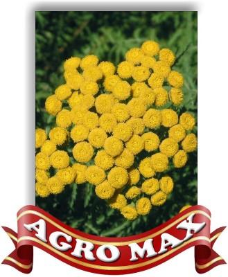 Agro Max MATRICARIA YELLOW Seed
