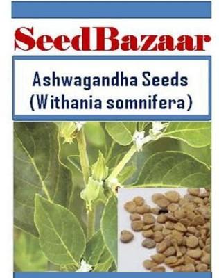 SeedBazaar Ashwagandha (Withania somnifera) / Indian Ginseng Seed