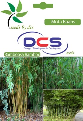 DCS Mota Baans Forest Plants(5g Seeds Per Pack) Seed