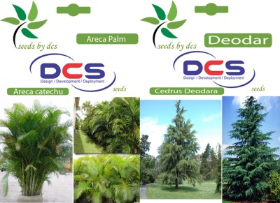 DCS Areca Palm and Deodar (2 Packet of Seeds) Seed