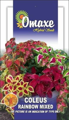 Omaxe COLEUS RAINBOW MIXED SUMMER FLOWER SEEDS-AVG 40/50 SEEDS BY OMAXE Seed