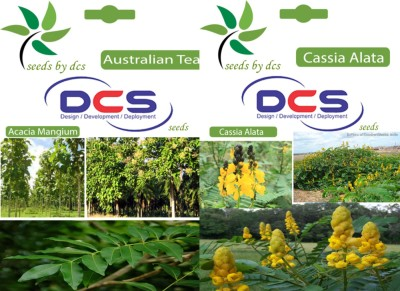 DCS Australia Teak & Cassia Alata (2 packets of seeds) Seed