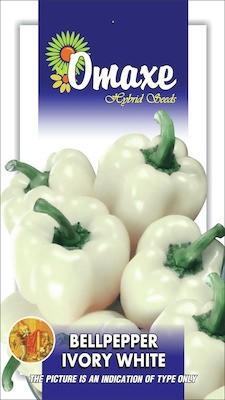 Omaxe CAPSICUM-BELLPEPPER WHITE 30 SEEDS BY OMAXE Seed