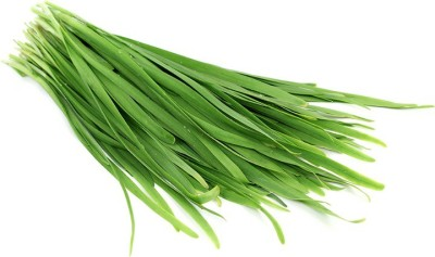Raunak Seeds Garden Garlic Chives Herb 50 Seeds*3 pkts Seed