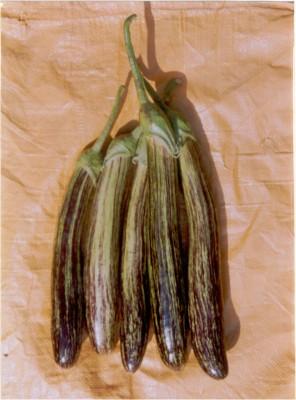 Indous Agriseeds Indo Us Shivlaheri Brinjal Seeds 200 Per Pecket Seed