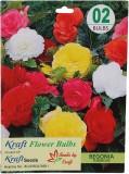 Kraft Seeds Begonia Seed (2 per packet)