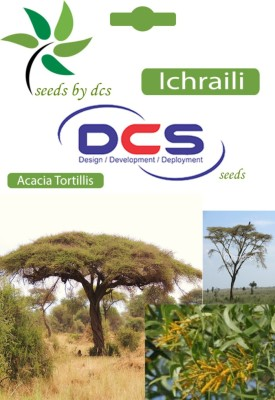 DCS Ichraili Forest Plant (20 Seeds Per Pack) Seed