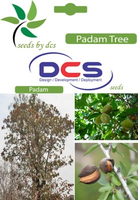 DCS Padam Forest Plant (10 Seeds Per Pack) Seed