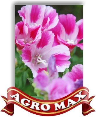AGRO MAX CLARKIA ELEGENS BRILLIANT MIX Seed