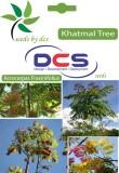 DCS Khatmal Forest Plant (5g Seeds Per P...
