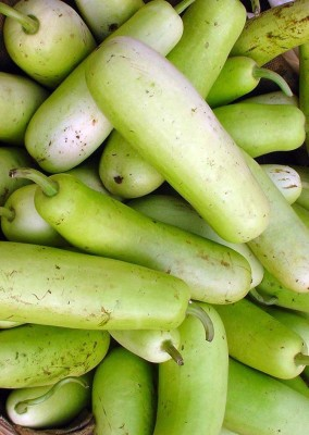 Real Seed Bottle Gourd F1 Hybrid Premium Seed
