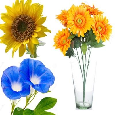 Alkarty Sunflower,Morning Glory,Zinnia Seed