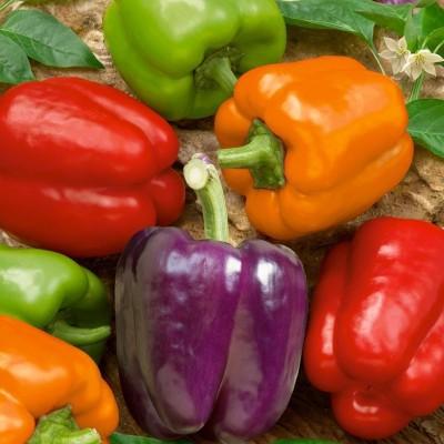 Nelesa Gardening Capsicum Bell Pepper 30 Seed