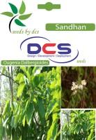 DCS Sandhan (5g Seeds Per Packet) Seed(5 per packet)