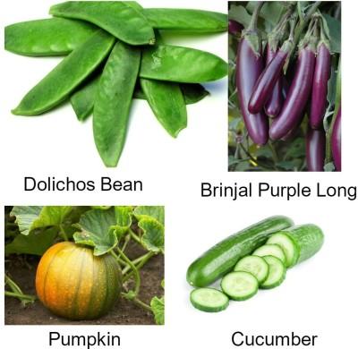 Easy Gardening Lab Lab, Brinjal Long Purple, Pumpkin,Cucumber F1 Hybrid Seed