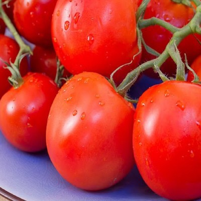 Biocarve Tomato Round Seed