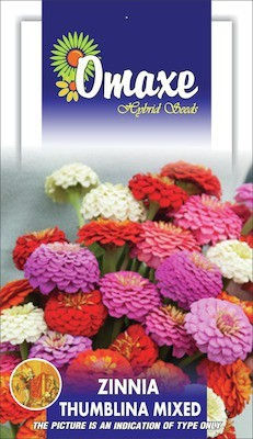 Omaxe ZINNIA THUMBELNIA MIXED SUMMER FLOWER SEEDS-AVG 40/50+ SEEDS BY OMAXE Seed