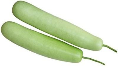 Shubh-Bhakti SuperBottleGourd(Lauki) Hybrid Seed