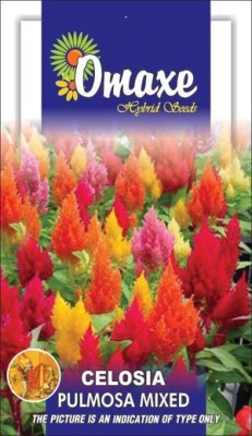 Omaxe CELOSIA MIXED SUMMER FLOWER SEEDS-AVG 100+SEEDS BY OMAXE Seed
