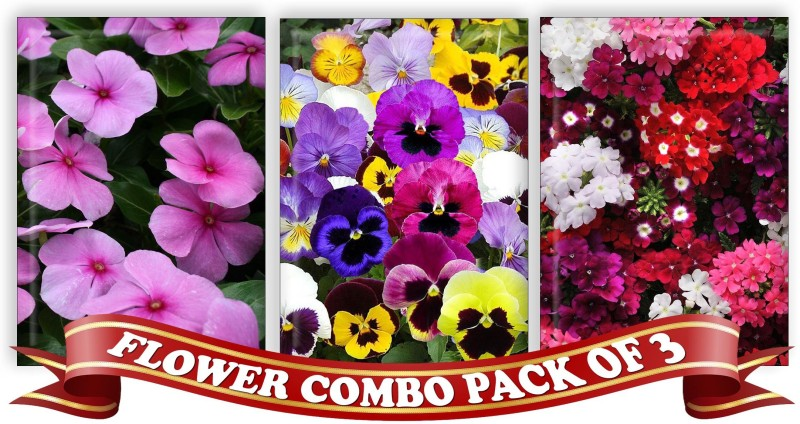 Real Seed Flower Combo Pack - Vinca Mixed, Pansy Double Mixed, Verbeena Mixed F1 Hybrid Seeds Seed(3 per packet)