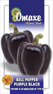 Omaxe CAPSICUM-BELLPEPPER PURPLE BLACK 20 SEEDS BY OMAXE Seed