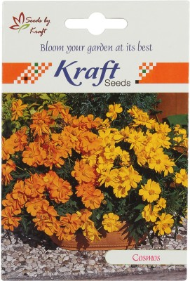 Kraft Seeds Cosmosunny Flower (Red) Seed
