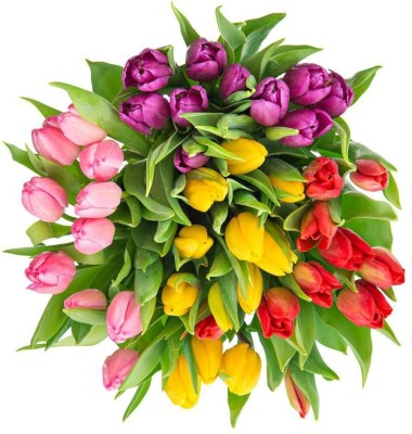 Bouquet Of Fresh Multicolor Tulips Framed Art Print Canvas Art