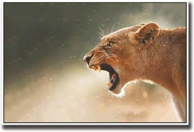 Lioness Fine Art Print