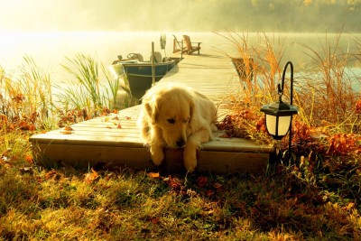 Labrador Retriever A3 HD Poster Art PNCA25104 Photographic Paper