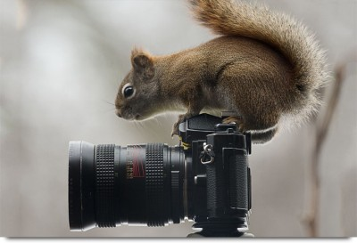 Squirrel clicking Camera Paper Print