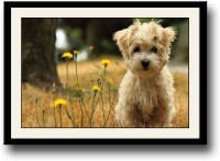 Cute dog with yellow flowers Fine Art Print(10 inch X 14 inch, Framed)