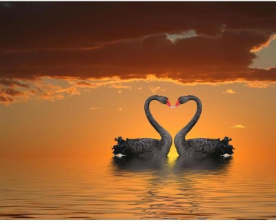 Romantic Swans Unframed Art Print Canvas Art