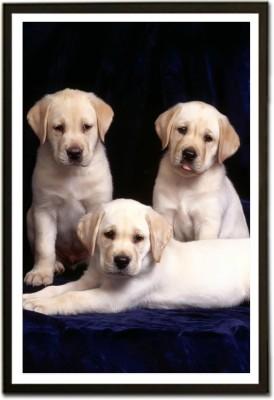 Framed Labrador Retriever puppy Fine Art Print