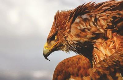 Posterhouzz Poster Eagle HD Paper Print