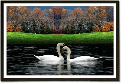 Framed Swans in Romantic Mode Paper Print