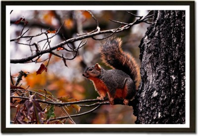 Squirrel on Tree Paper Print