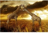 Nature poster Collection of beautiful na...