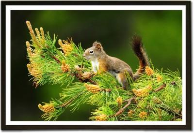 Framed Cute Squirrel Paper Print