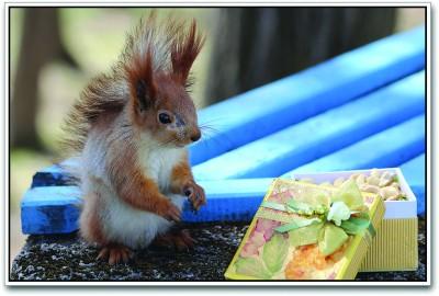 Squirrel Paper Print