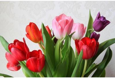 Colorful Tulips Unframed Art Print Canvas Art