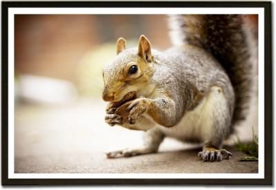 Cute Squirrel Paper Print