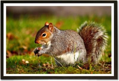 Beautiful Squirrel Paper Print