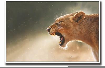 Posterhouzz Lioness Fine Art Print