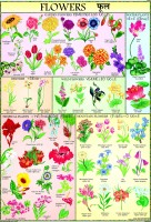 Flowers Chart For Children Paper Print(40 inch X 28 inch, Rolled)