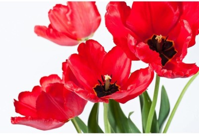 Tulips In A Vase Premium Poster Paper Print