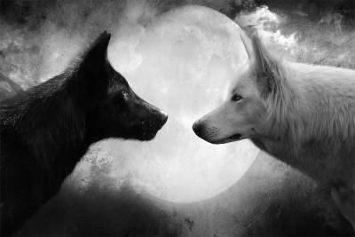 good wolf vs bad wolf Paper Print