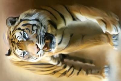 Go Hooked Enraged Tiger Poster Paper Print