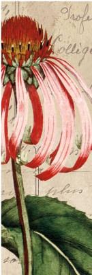 Montage - Jardin Botanique I Fine Art Print