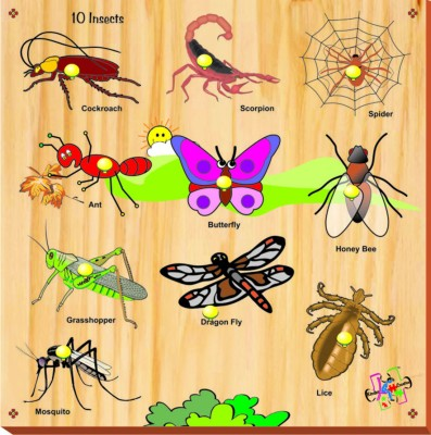 Kinder Creative Insects with Knobs