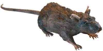 Uncle Milton Rat